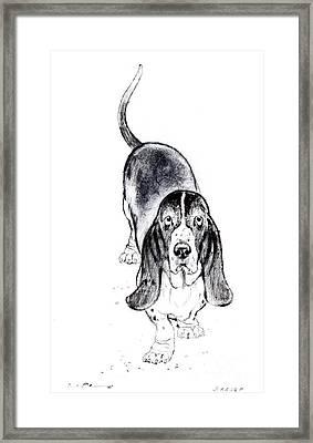Basset Hound Portrait Framed Print by Kurt Tessmann