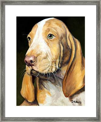 Basset Hound Puppy Framed Print by Dottie Dracos