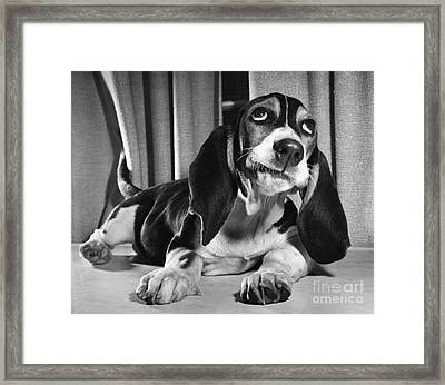 Basset Hound Puppy Framed Print by ME Browning