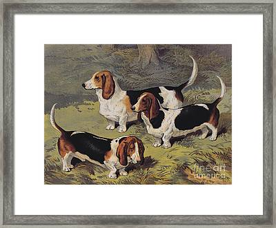 Basset Hounds Framed Print by English School