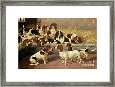 Basset Hounds In A Kennel Framed Print