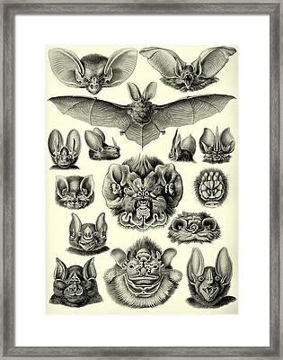 Bat Bats Haeckel Chiroptera Mammals Microchiroptera Framed Print by Movie Poster Prints