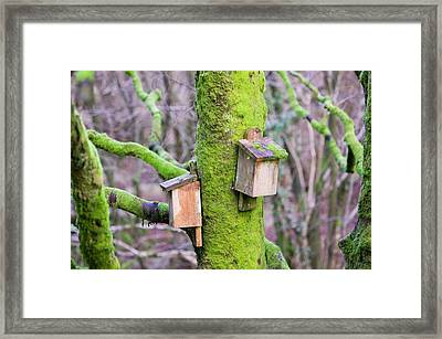Bat Boxes In The Forest Of Bowland Framed Print by Ashley Cooper