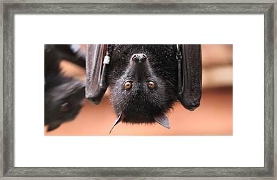 Bat Eyes Framed Print