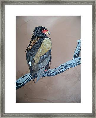 Bateleur Framed Print by Robert Teeling