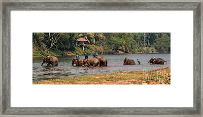 Framed Print featuring the photograph Bath Time by Vivian Christopher