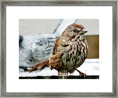 Framed Print featuring the photograph Bathe Then Fluff by VLee Watson