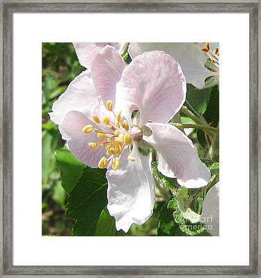 Bathed In Sunlight 1 Framed Print by Cedric Hampton