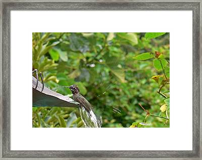 Bathing Buddies  Framed Print