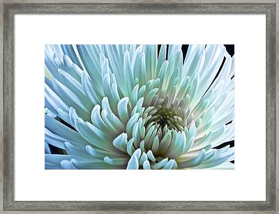 Bathing In Blue Framed Print by Jon Glaser
