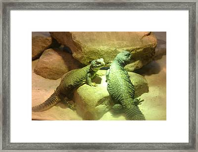 Bathing In Lights Framed Print by Dervent Wiltshire