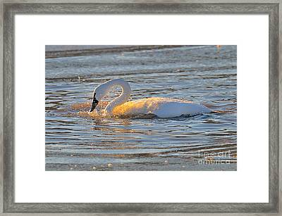 Bathing In Sunlight Framed Print