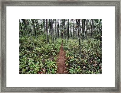 Batona Trail Framed Print by Dawn J Benko