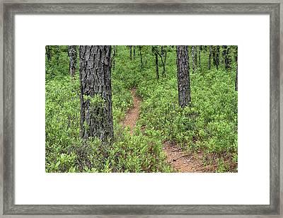 Batona Trail II Framed Print