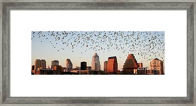 Bats Over Austin Panoramic Framed Print by Randy Smith
