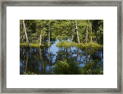 Batsto River Framed Print