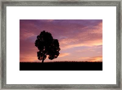 Battlefield Tree Framed Print