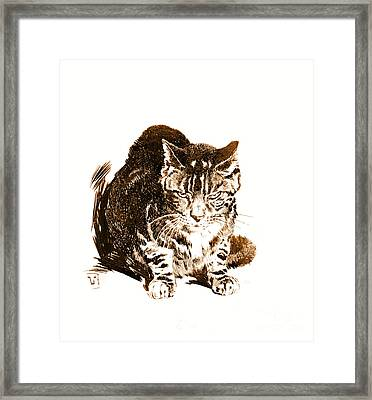 Battleship Cat 1898 Framed Print