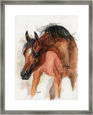 Bay Arabian Foal Watercolor Portrait Framed Print by Angel Ciesniarska