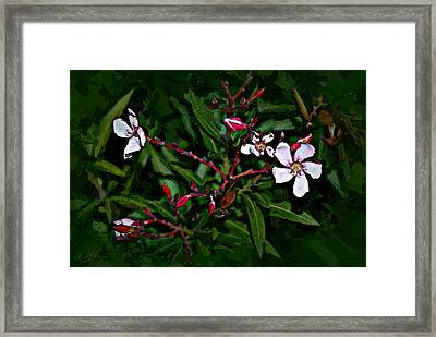 Bay Beauty Framed Print