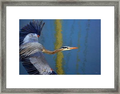 Bay Blue Heron Flight Framed Print by Robert Bynum