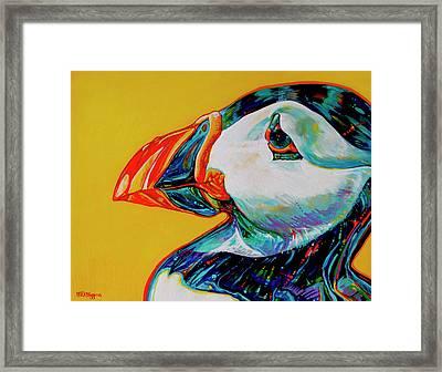 Bay Bulls Puffin Framed Print by Derrick Higgins