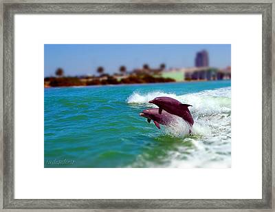 Bay Dolphins Framed Print