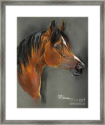 Bay Horse Portrait Framed Print