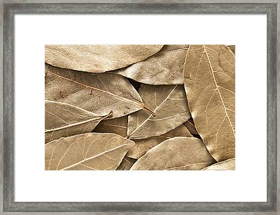 Bay Leaves Framed Print by Tom Gowanlock