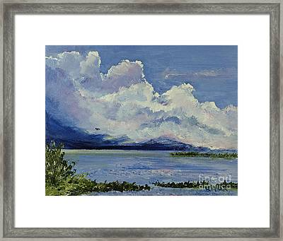 Bay Pines Framed Print by Barbara Moak