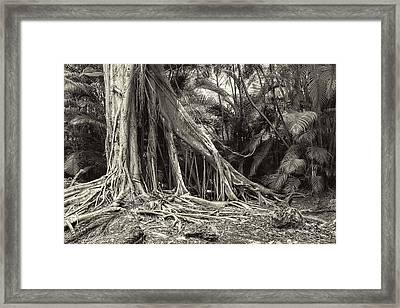 Strangler Fig Framed Print by Rudy Umans