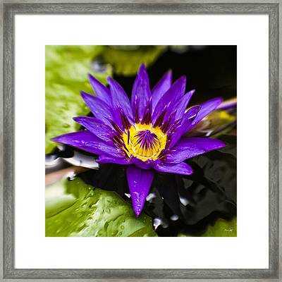Bayou Beauty Framed Print