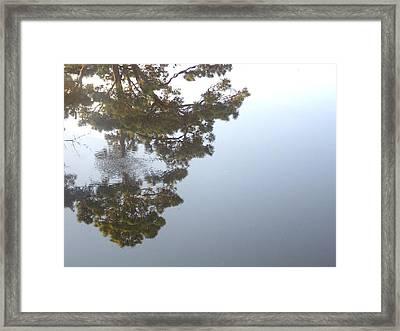 Bayou Bubbles Framed Print