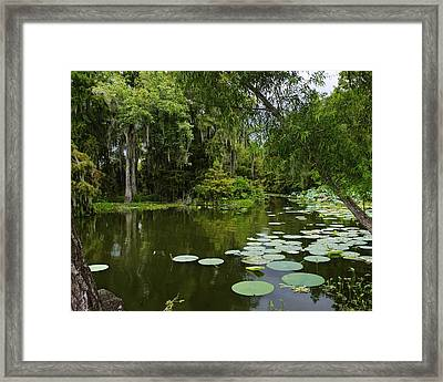 Framed Print featuring the photograph Bayou Lushness by Rhonda McDougall
