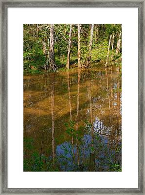 Bayou Reflections Framed Print
