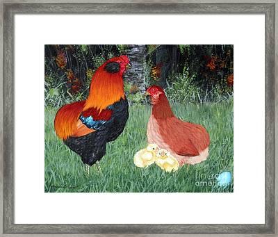 Bb Red Araucana Sop Framed Print by Amanda Hukill