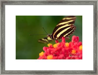 Be Fly Framed Print