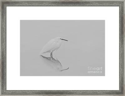 Framed Print featuring the photograph Be Still by Ruth Jolly