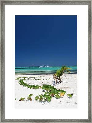 Beach And Vegetation Playa Blanca Punta Cana Resort Framed Print