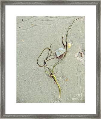 Beach Arrangement 5 Framed Print