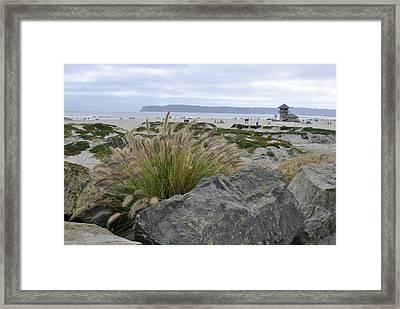 Beach At Coronado Island Framed Print by Misty Stach