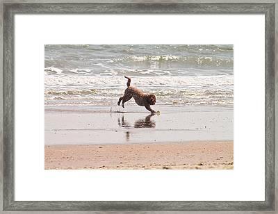 Beach Ball Framed Print