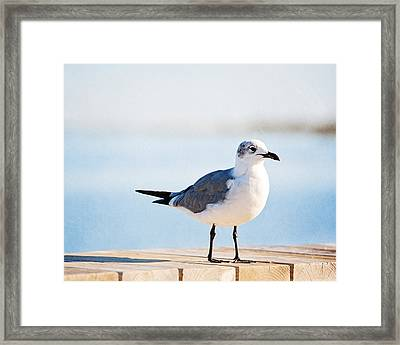 Beach Begger Framed Print by Carolyn Cochrane