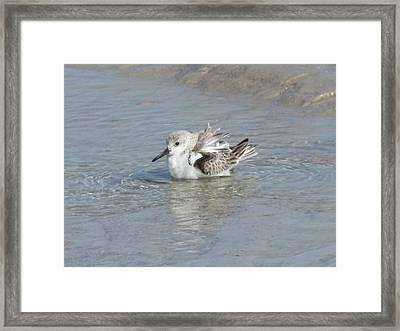 Beach Bird Bath 4 Framed Print
