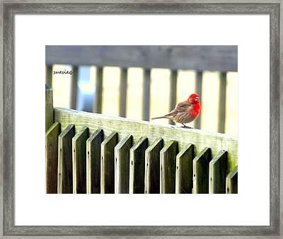 Beach Bird Framed Print by Sue Rosen