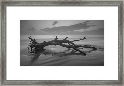 Beach Bones Framed Print by Debra and Dave Vanderlaan