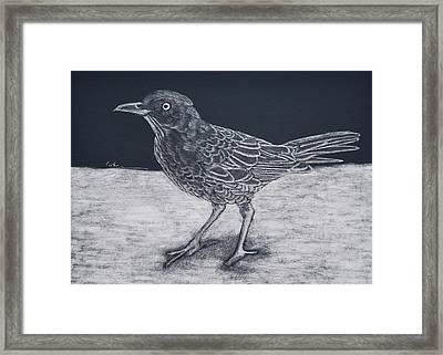 Beach Bum Framed Print by Diane Cutter