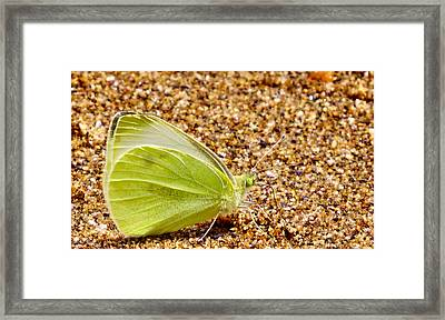 Beach Bum Framed Print by Art Dingo