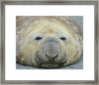 Beach Bum Framed Print by Tony Beck