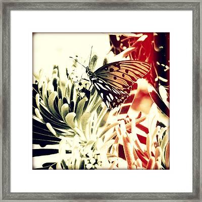 Beach Butterfly I Sunset Framed Print